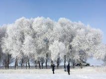 访客雪树在冬天 免版税库存图片