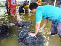 访客活动在动物保护中 库存照片