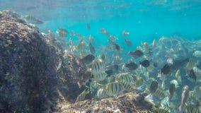 证明有罪特性学校游泳在礁石在hanauma海湾 图库摄影