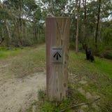 证明有罪足迹或伟大的北路在Bucketty附近,在洪特尔谷,NSW,Austrialia 免版税图库摄影