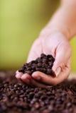 评估咖啡庄稼 库存照片