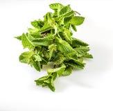 词根新鲜和未加工的绿色薄菏花束和叶子  在被隔绝的白色背景 图库摄影