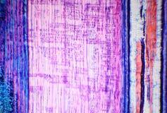 词根木本植物的纵切面在microscop下的 库存照片