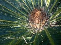 词根美妙地色的野生植物 库存照片