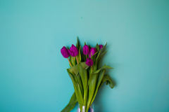 词根花郁金香美丽的充满活力的叶子花束在蓝色背景的 免版税库存照片