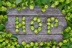 词由啤酒花球果树做的蛇麻草 库存照片