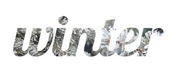 词`冬天` 云杉的分支的信件在雪和霜的 免版税库存图片