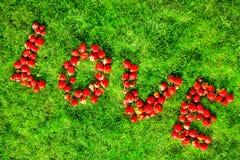 词& x22; love& x22;做草莓在绿色草坪 免版税库存照片