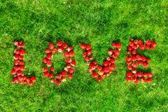 词& x22; love& x22;做草莓在绿色草坪 免版税库存图片
