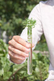 试管的绿色植物 库存图片