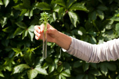 试管的绿色植物 免版税库存图片