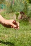 试管的绿色植物 库存照片