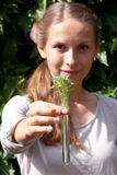 试管的绿色植物 免版税库存照片