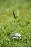 试管的绿色植物 图库摄影