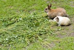 试验品兔子 免版税库存照片