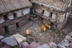 试验品在秘鲁 免版税库存照片
