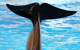 试验尾标鲸鱼 免版税库存图片