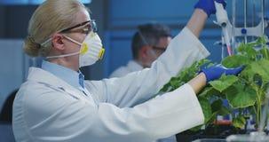 试验绿色植物的科学家 股票视频