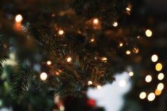 诗歌选在杉树分支blured背景点燃 免版税库存照片