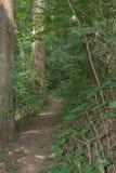诚实道路穿过深森林,有树和灌木的对任一边 免版税库存图片