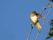 说话模糊不清的人鸟的图象 库存图片