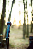 话筒接近在森林里在日落 库存图片