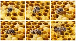 诞生蜂 免版税库存图片