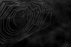 详细一个自然蜘蛛网的黑白宏观摄影 免版税库存照片