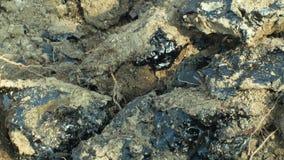 详细毒性沥青沥青化学制品和特写镜头黏土 前转储废物,作用自然从污染的土壤和 股票录像