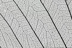 详细资料叶子结构 库存图片