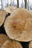 详细资料堆木材森林 库存图片