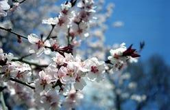 详细资料开花结构树 免版税库存照片