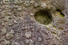 详细资料生长石头 免版税库存照片