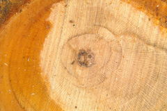 详细资料结构树 图库摄影