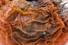 详细资料腐烂的皮肤蕃茄 免版税图库摄影