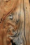 详细资料被打结的树干 免版税库存图片