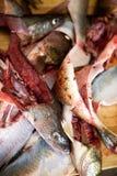 详细资料鱼胆量 免版税库存照片