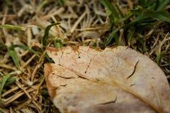 详述一片死的叶子的射击在秋天 库存照片
