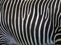 详述斑马 免版税图库摄影