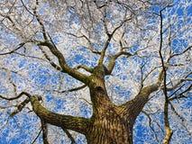 详述结构树冬天 库存图片