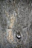 详述结构树 免版税图库摄影