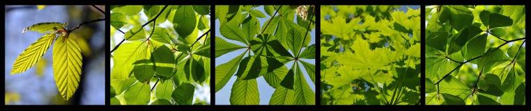 详述通配森林的春天 免版税图库摄影