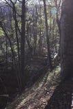 详述风景的森林 免版税库存照片