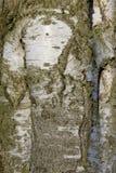 详述结构树 库存照片