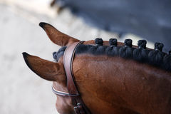 详述(耳朵、脖子和鬃毛)从上面被拍摄的马头 免版税库存图片