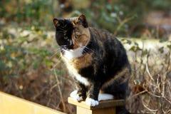 详细异乎寻常的猫 免版税库存照片
