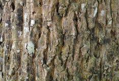 详细的树皮纹理 自然木头 库存照片