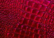 详细的紫红色的红色口气鳄鱼皮革纹理样式 库存照片