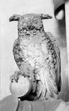 详细,灰色猫头鹰由石头制成,安置在Staglieno公墓在热那亚,意大利 库存照片