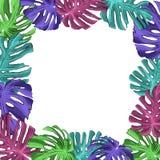 语篇框架图热带成长曼彻斯特霓虹颜色 皇族释放例证